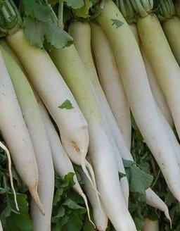 Агротехника выращивания дайкона